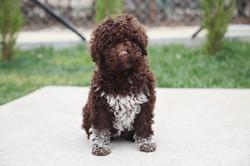 10weeks cutie