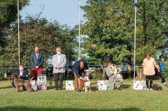 Tango won Junior B I S, Flori best puppy in breed