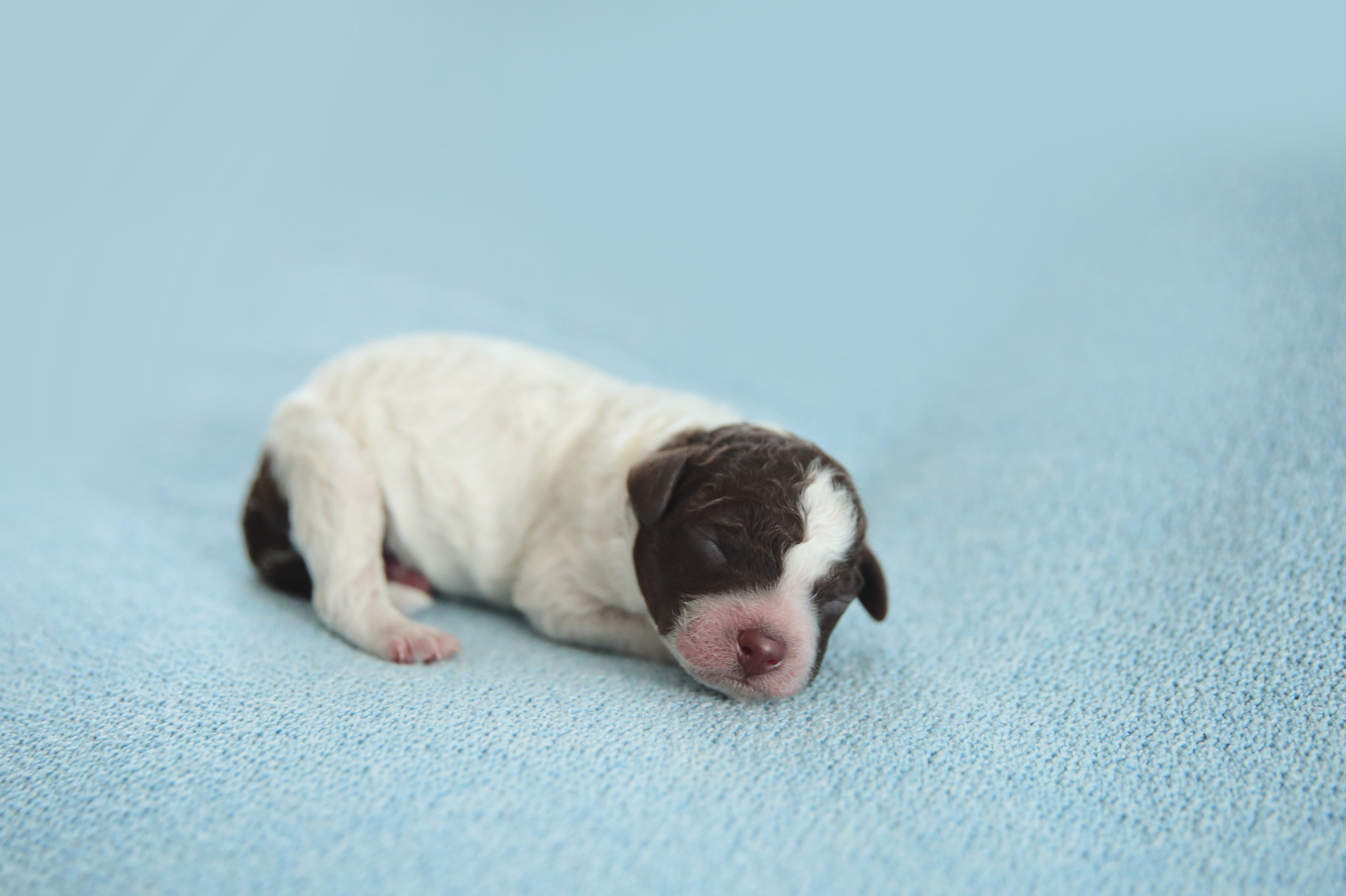 7days old