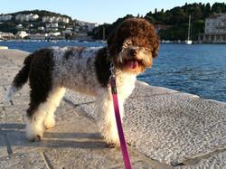 Walking evening after show in Croatia