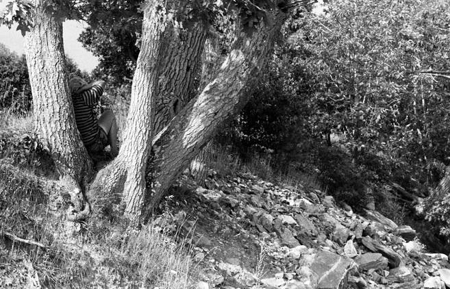 Woman in Tree