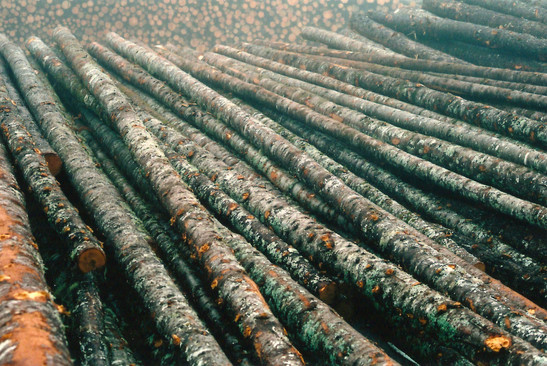 Sea of Logs