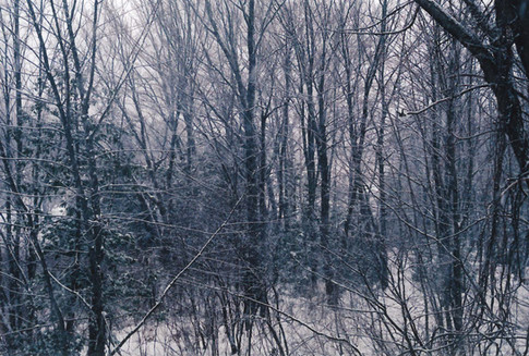 Cobweb of Trees