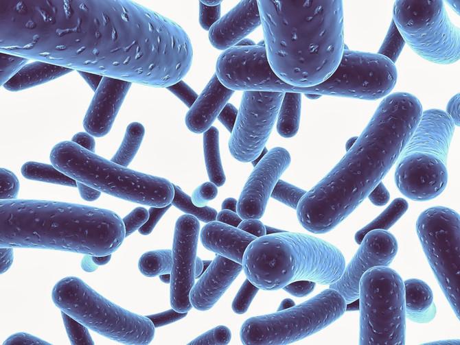 PREMIUM KOI FOOD and NUCLEOTIDES + PROBIOTICS