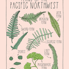 Ferns of the Pacific Northwest