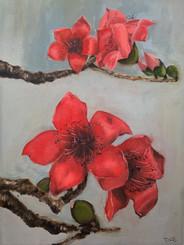 Red Kapok Flower No. 2
