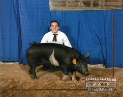 4-H Hog by Kevin LaChere