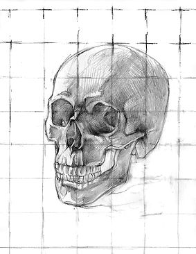 Human skull carbon dust anatomy illustration grid sketch