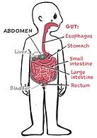 Upset Tummy Comic - Child Gut Anatomy