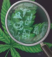 UTMJ Cannabis Cover Detail