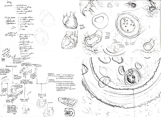 Coronary Artery Disease illustration process work