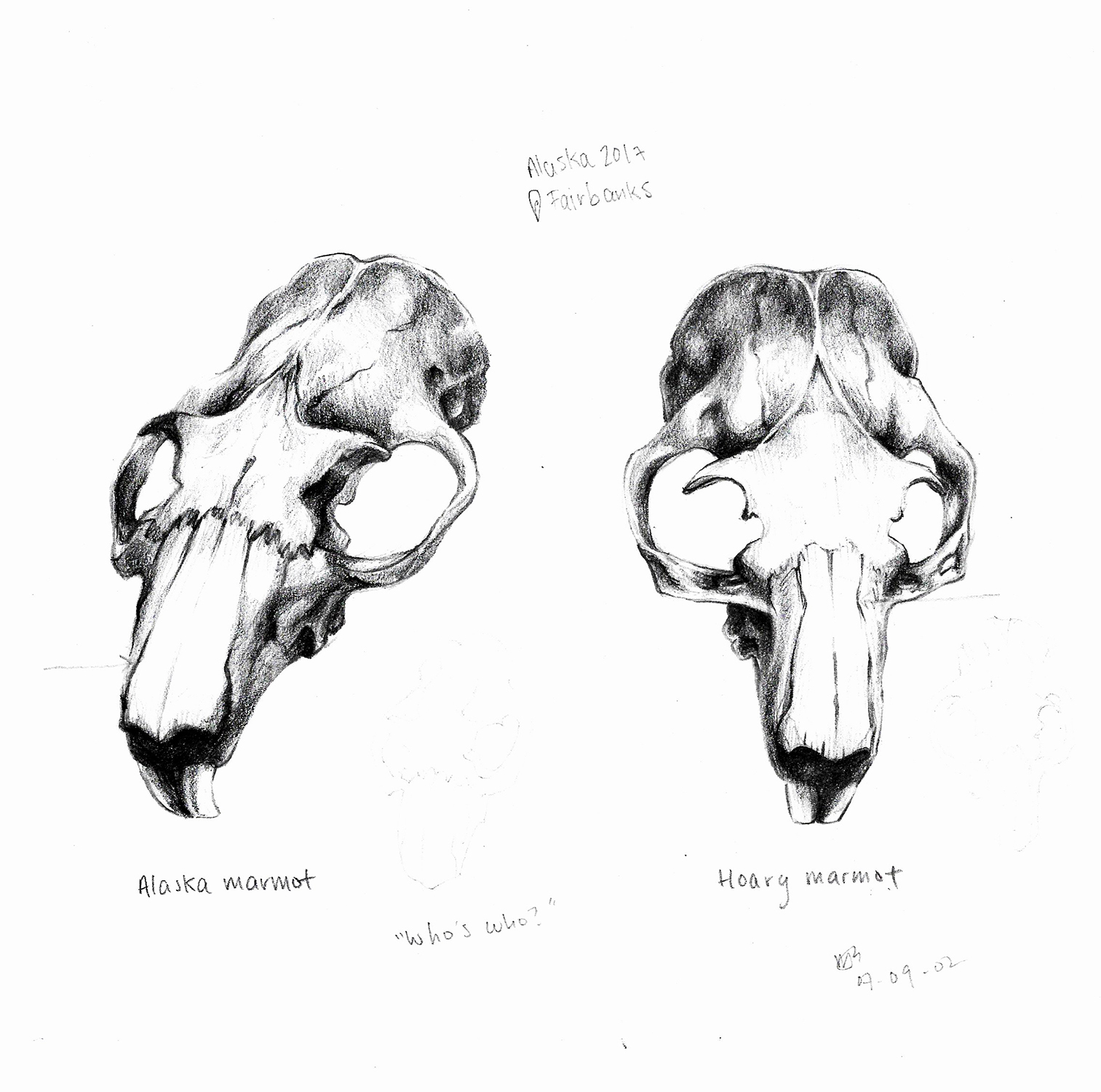 2017_marmots