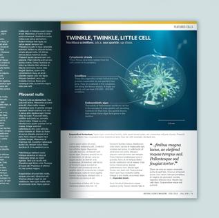 Sea Sparkle Cell