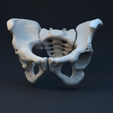 3D Model: Pelvis