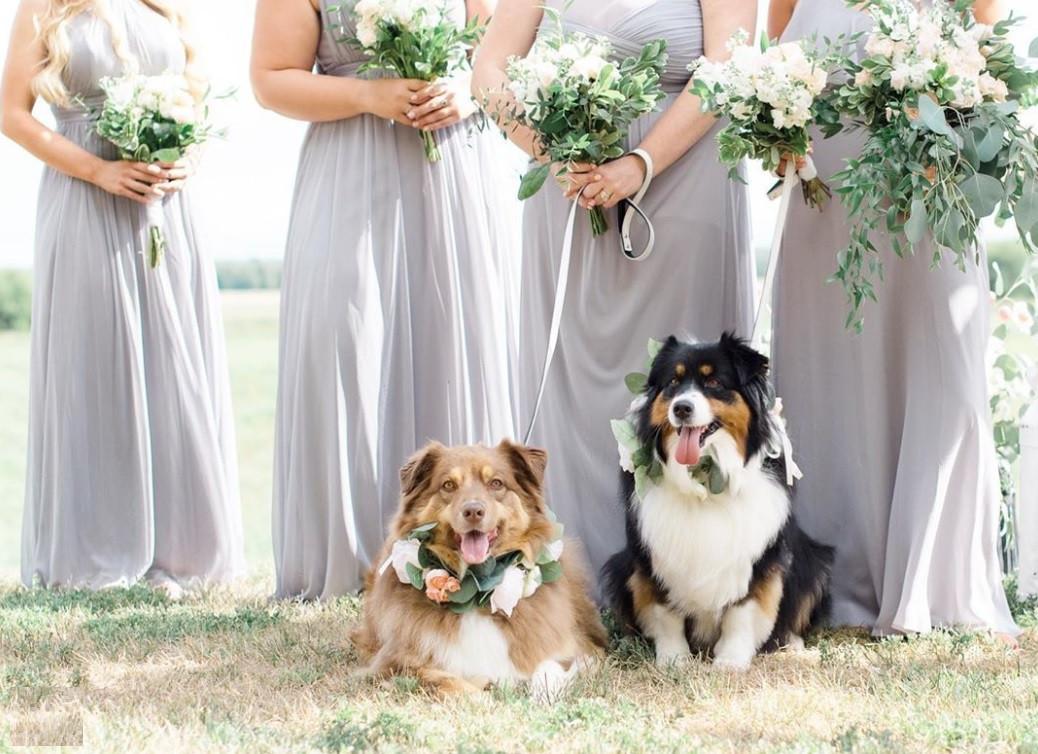 Wedding Dogs bride bridesmaids soft grey