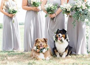 Wedding Dogs bride bridesmaids soft grey greenery eucalyptus.jpg