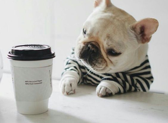 Oh for the love of coffee! A Naturopath's perspective.