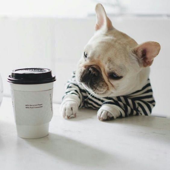 Is Coffee Good you?