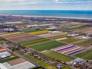 Bollenvelden bij Lisse en Noordwijk vanuit de lucht