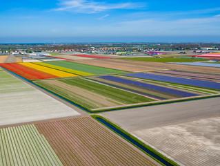 Bollenvelden bij Lisse en Noordwijkerhout vanuit de lucht - drone