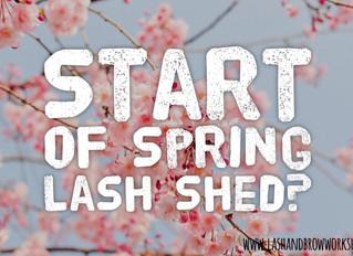 Start of Spring Lash Shed?