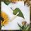 Thumbnail: Bamboo Lipgloss Wands - Box of 100