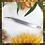 Thumbnail: SHARK - Curved Isolation Tweezers