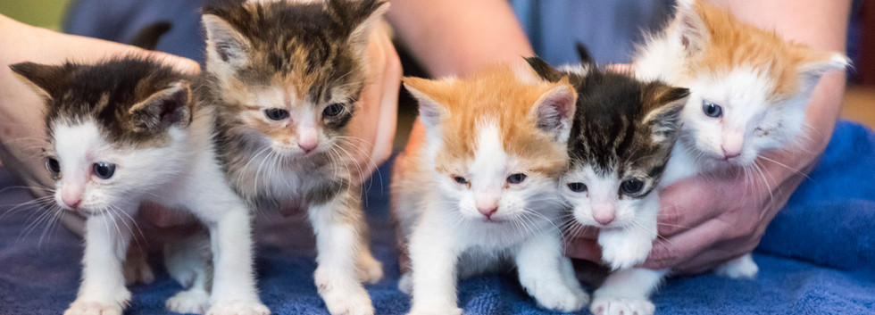 kitties_37.jpg
