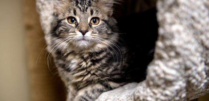 kitties 11.2922.jpg
