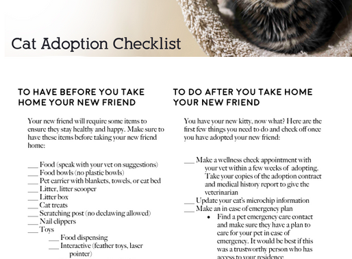New cat/kitten checklist