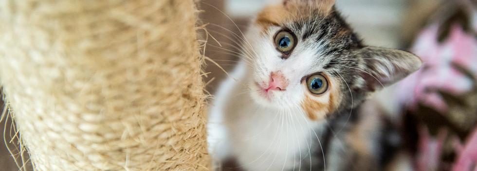 kitty_cottage-12.jpg