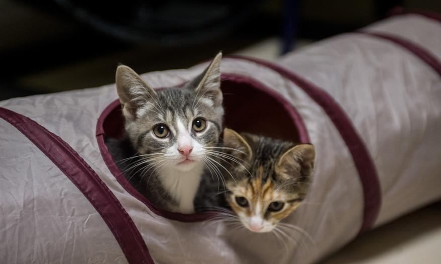 kittens_june022.jpg