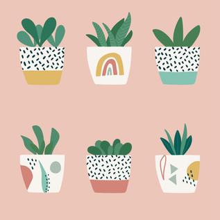 Pot Plant Shelfies