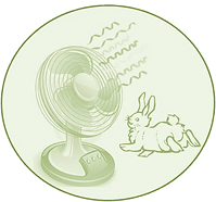 rabbitcare, rabbit, rabbit care, south africa