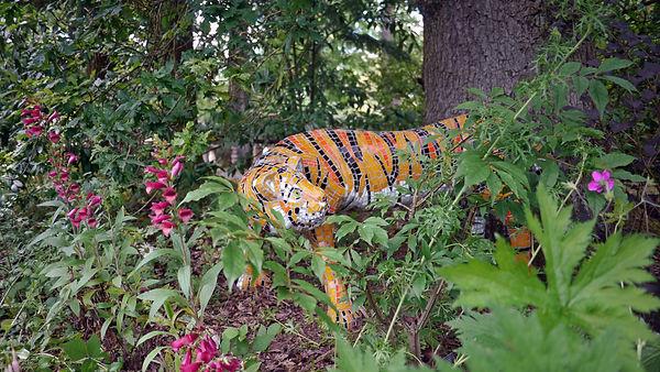 Asha the Tiger