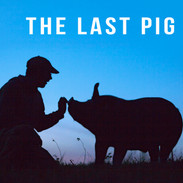 THE LAST PIG - Farmer Bob Comis reaches out to pig at dusk