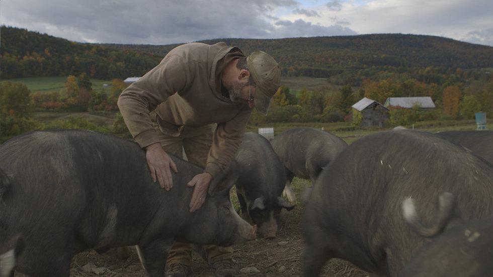 Wide B _ Pigs.jpg