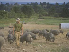 Being a Pig