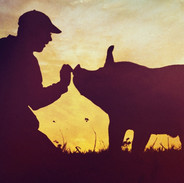 THE LAST PIG - Farmer Bob Comis reaches out to pig, dawn