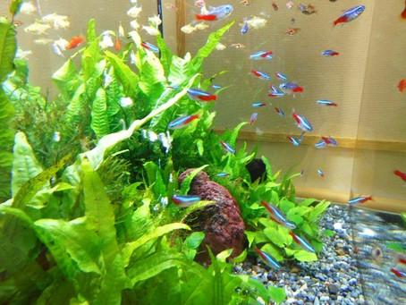 こすもすフロアに熱帯魚がやってきました!