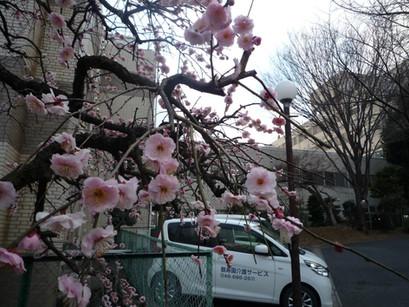 もうすぐ春!