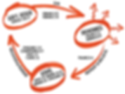 three circles image.png