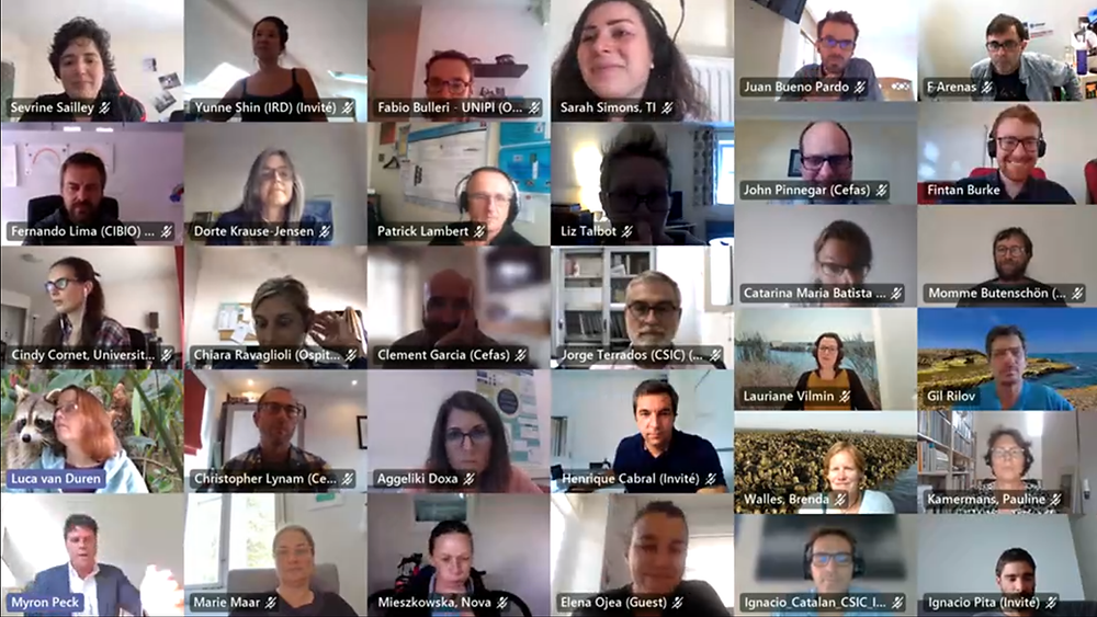 Screenshot of the online meeting, showing a gallery view of the participants