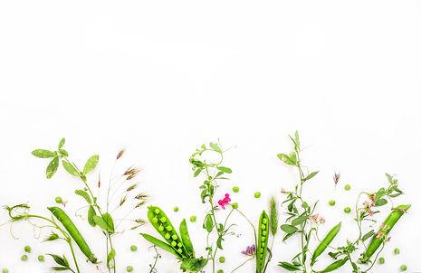 various-wild-meadow-green-herbs-on-white