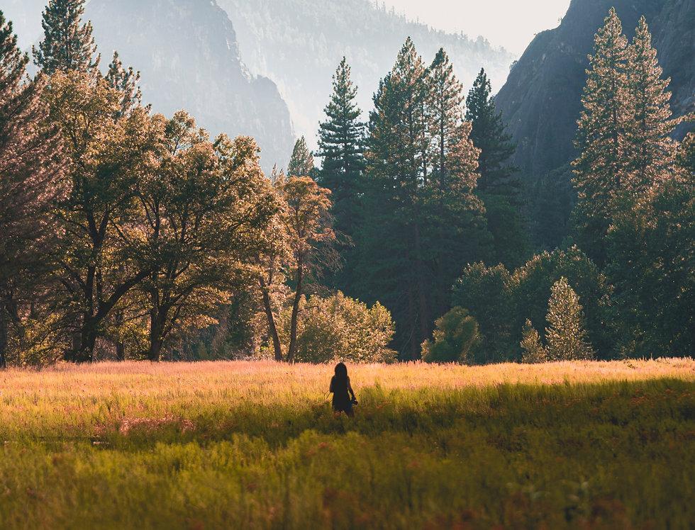 Yosemite Lights: Sunset