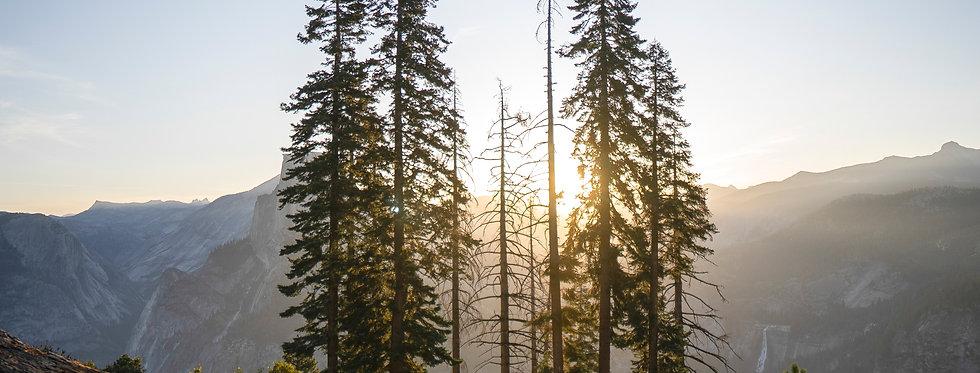 Yosemite Lights: Sunrise Trees