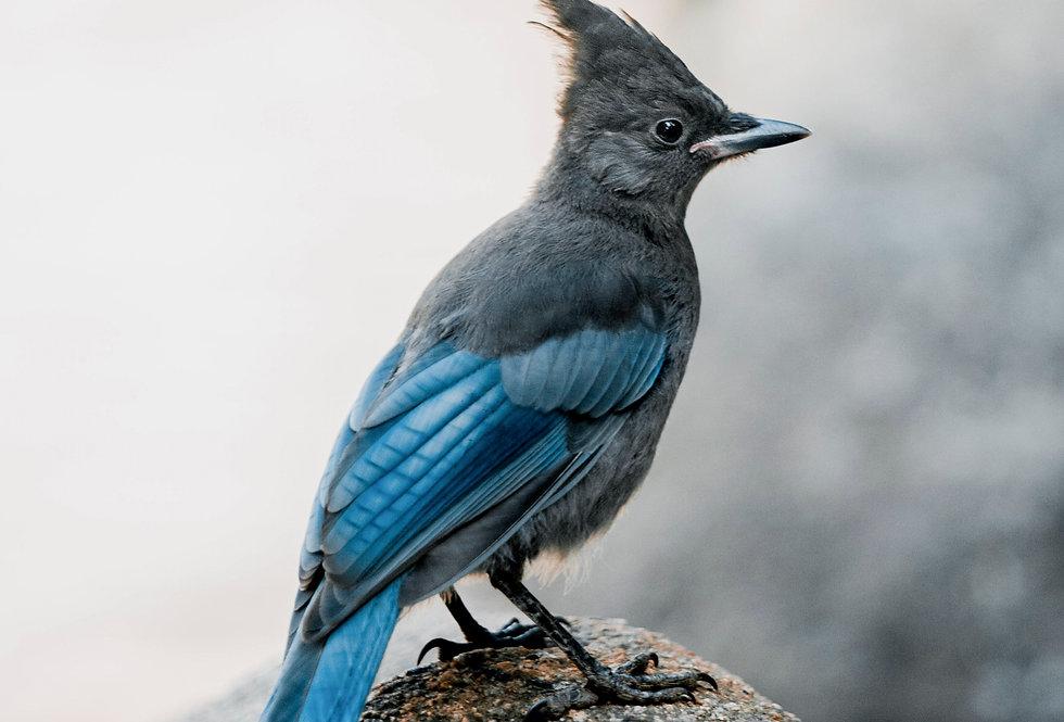 Yosemite Lights: Bird