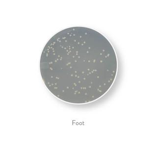 bacteria all 30-04.jpg