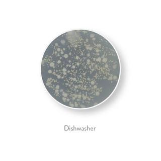 bacteria all 30-30.jpg