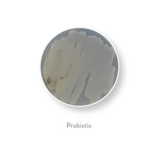 bacteria all 30-17.jpg
